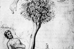 Miscellanea d'Alchimia, Anon, B.M.L. Florence, 14ème siècle : de la mort surgit une vie nouvelle.