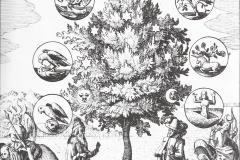 Johann Daniel Mylius, Philosophia reformata, 17ème siècle : l'arbre de la philosophie