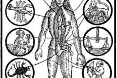 Homme zodiaque, Mondino de Luzzi ,1513